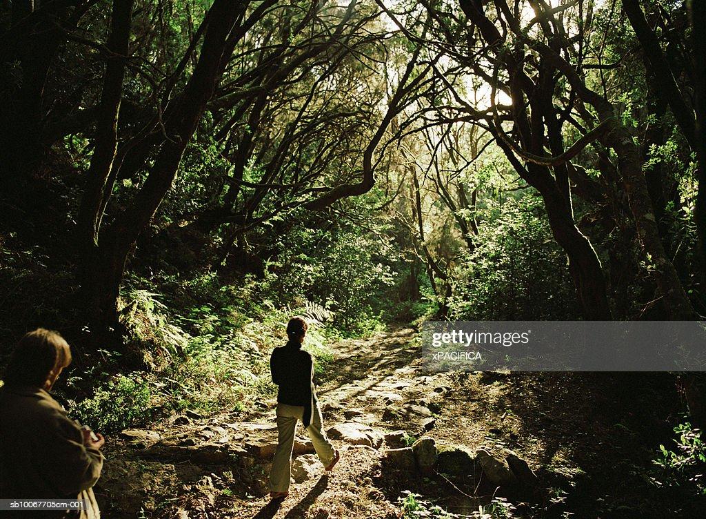Canary Islands, La Gomera, people walking in forest, rear view