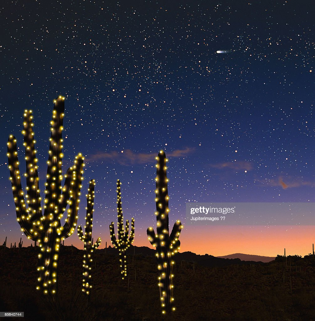 Candelabra cacti with Christmas candles