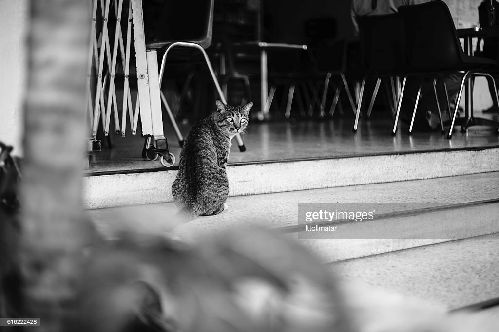 candid thai cat looked at the camera : Stock Photo