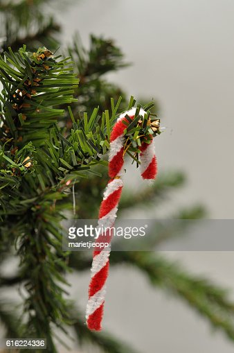 Candy cane Christmas tree decoration : Photo