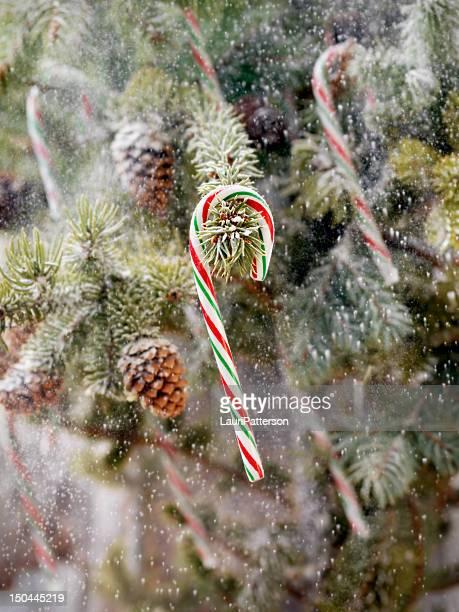 Candy Canes suspendus sur un arbre de Noël
