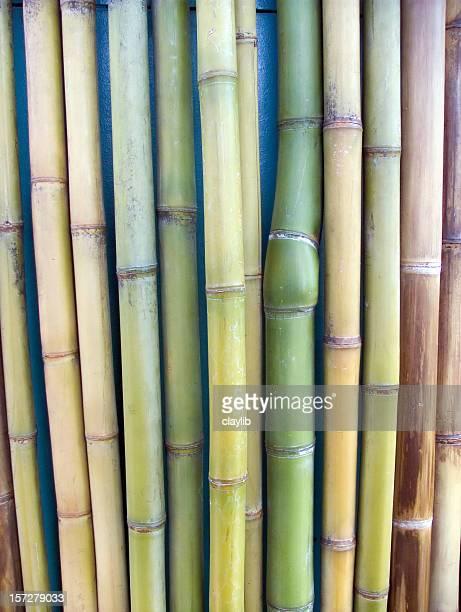 cane wall