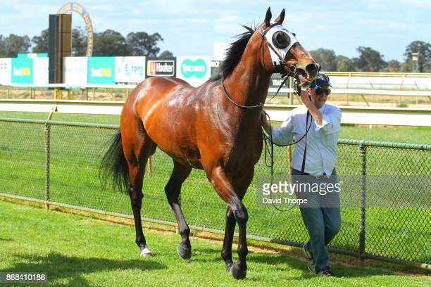 Canelo in the mounting yard after winning the Royal Hotel Benalla BM64 Handicap on October 31 2017 in Benalla Australia