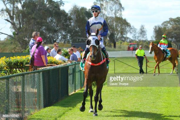 Canelo ridden by Thomas Stockdale returns to the mounting yard after winning the Royal Hotel Benalla BM64 Handicap on October 31 2017 in Benalla...