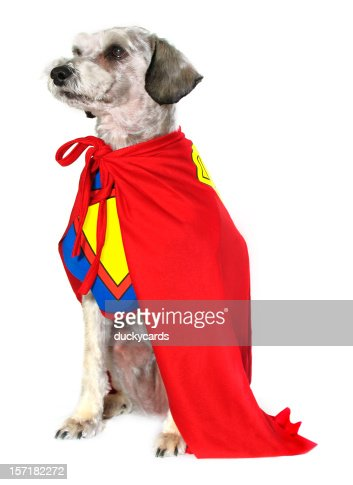 Canine Super Hero
