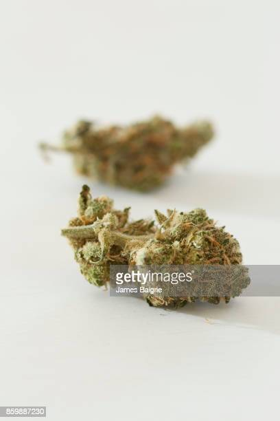 Cannabis bud detail