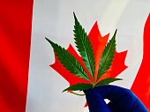 Cannabis plant leaves and Canada flag