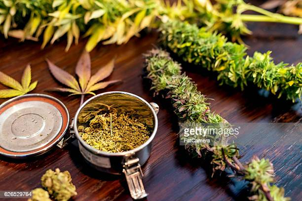 Cannabis tin can sitting next to trimmed marijuana plants