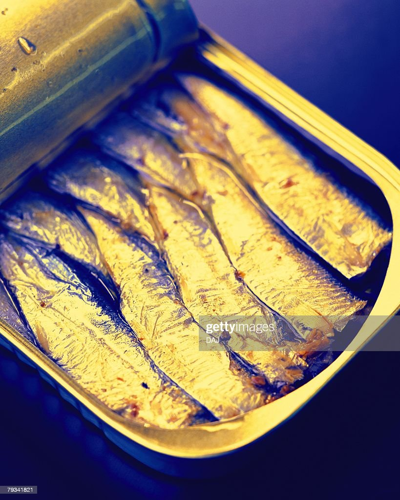 Canned Sardines, High Angle View, Close Up : Stock Photo