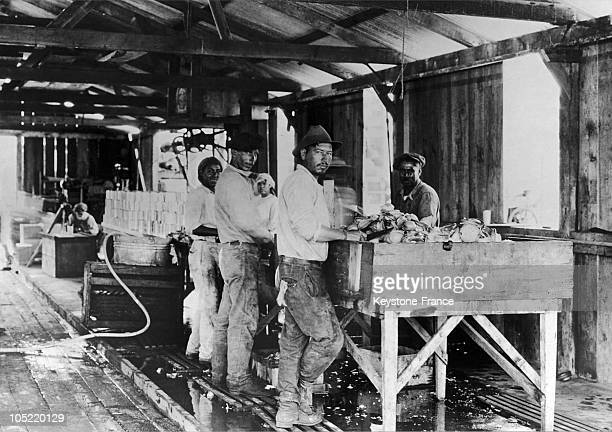 Canning Fish In The United States To 1930
