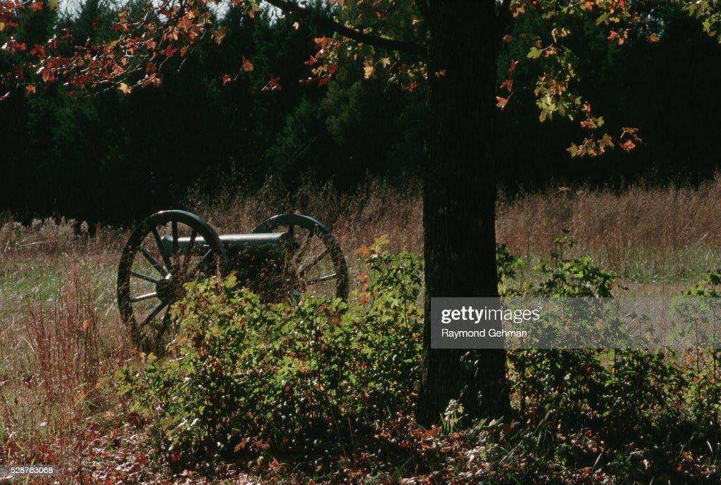 Cannon by an Oak Tree