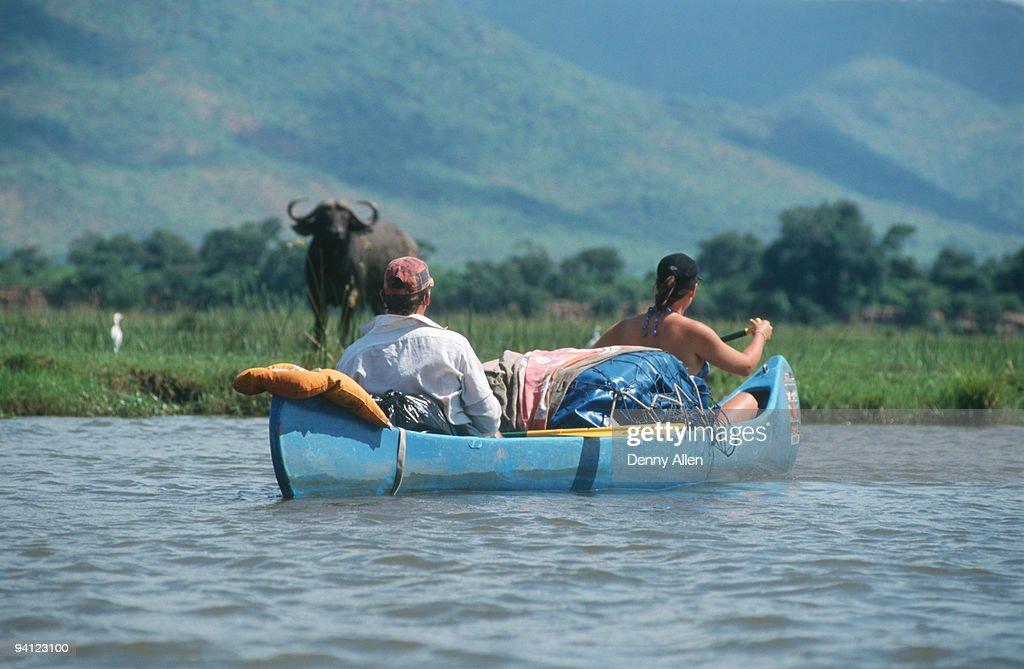 Canoeing safari watching buffalo (Syncerus caffer), Lower Zambezi River, Zimbabwe