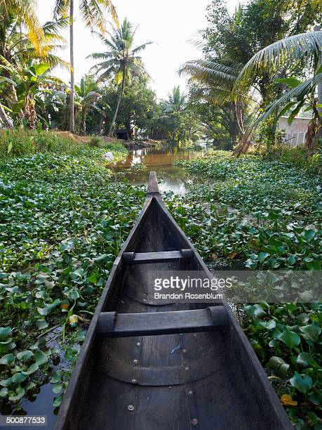 Canoeing through the backwaters of Kerala