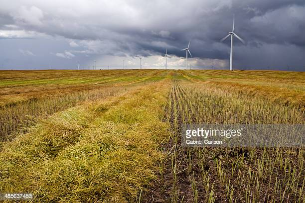 Canola and Wind Turbines