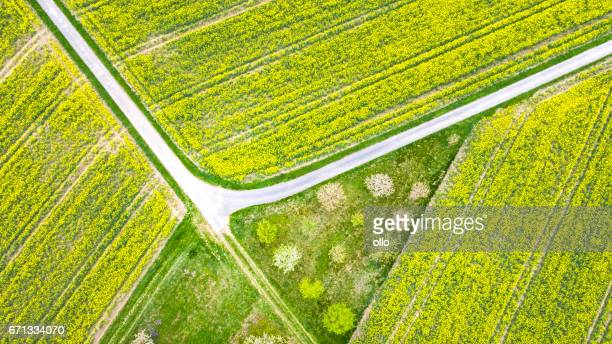Canola field and trees - aerial view