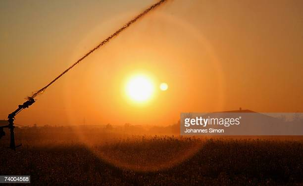 A canola field is irrigated in the early morning on April 27 2007 in Kirchheim near Munich Germany According to weather forcasts the unusual warm...