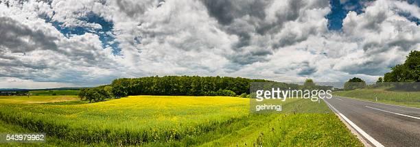Canola Field in estate cielo