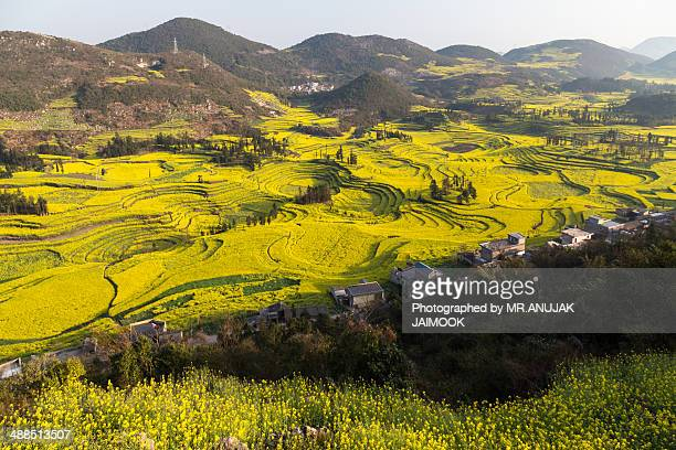 Canola flower fields of Louping, Yunnan, China