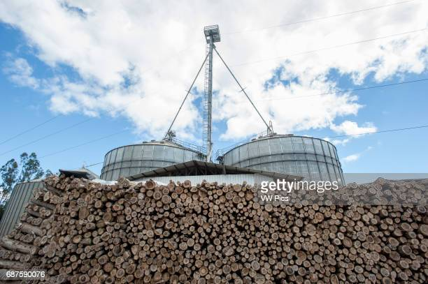Canola oil production with Eucalyptus wood pile