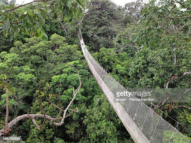Canopy walk, Peruvian Amazon rainforest