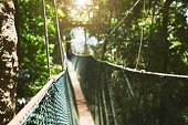 Long elevated walkway through the treetops in rainforest - Borneo, Malaysia