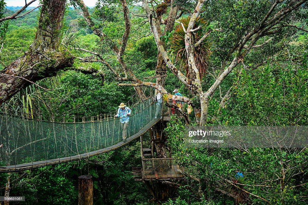 Canopy Walk Suspension Bridge High Above The Jungle Floor, Peru.