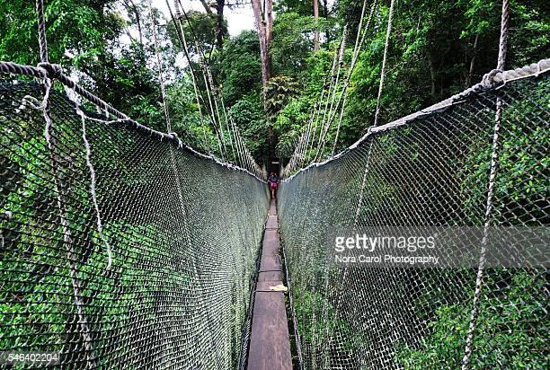 Canopy walkway in Mt Kinabalu national Park, Sabah Borneo.
