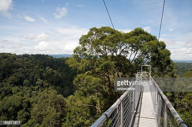 Canopy Walkway in Ulu Temburong National Park, Brunei