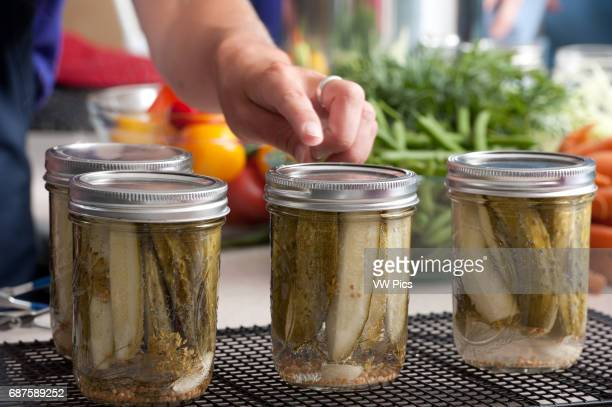 Cans of pickling cucumbers in process of being pickled