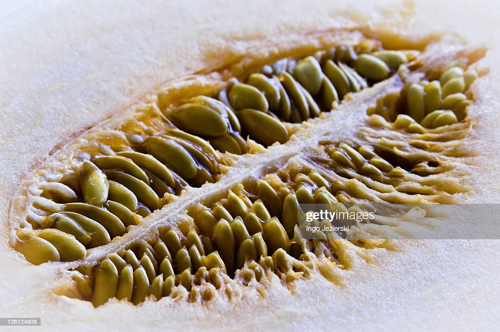 Cantaloupe cut open : Stock Photo