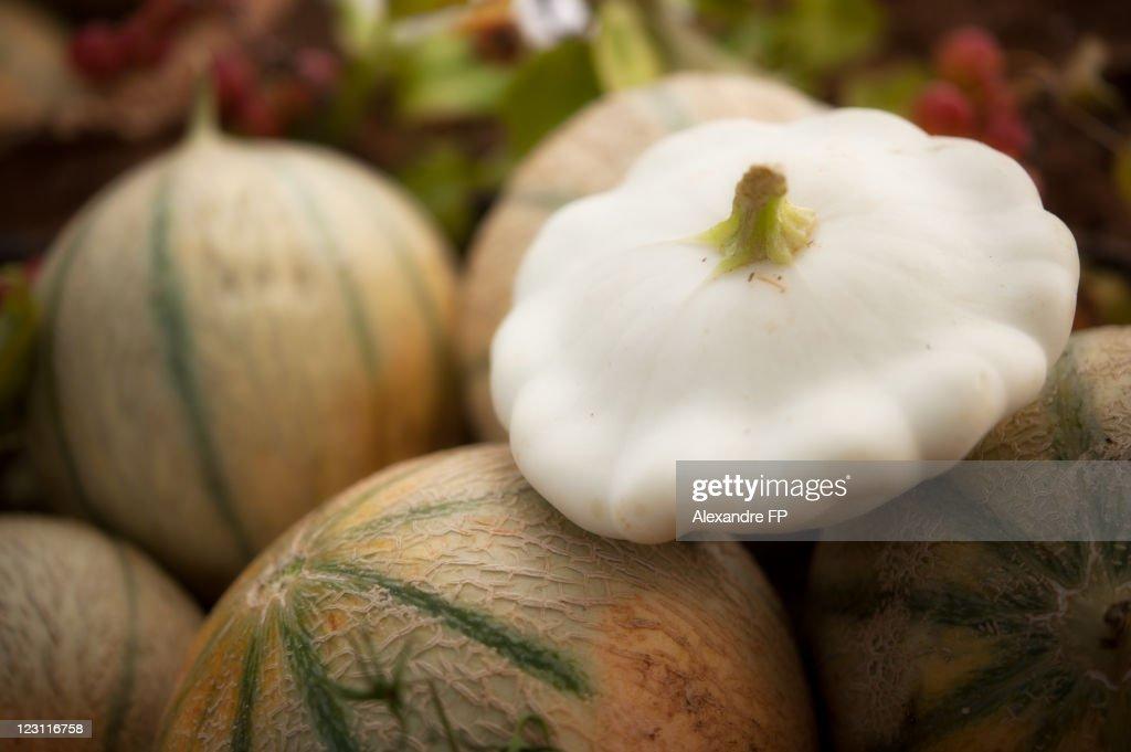 Cantaloupes and pattypan squash