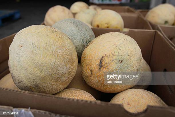Cantaloupes are displayed in a produce market on September 29 2011 in Miami Florida The Centers for Disease Control and Prevention reported that...