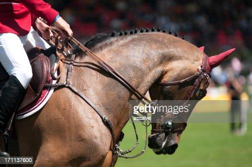 canter gallop