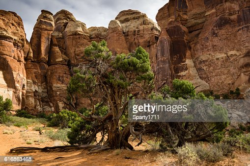Canyonlands National Park Backcountry : Stock Photo