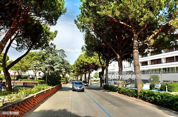 Caorle Veneto Italy May 2014 Cupressus grow along the street in the Italian resort Caorle at the Adriatic sea coast