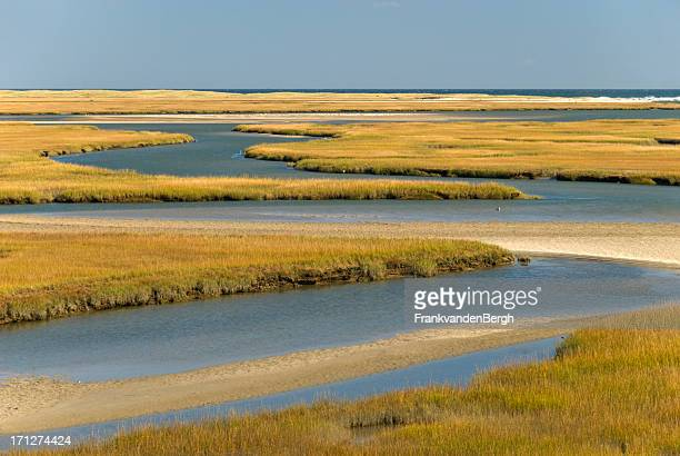Cape Cod Wetlands