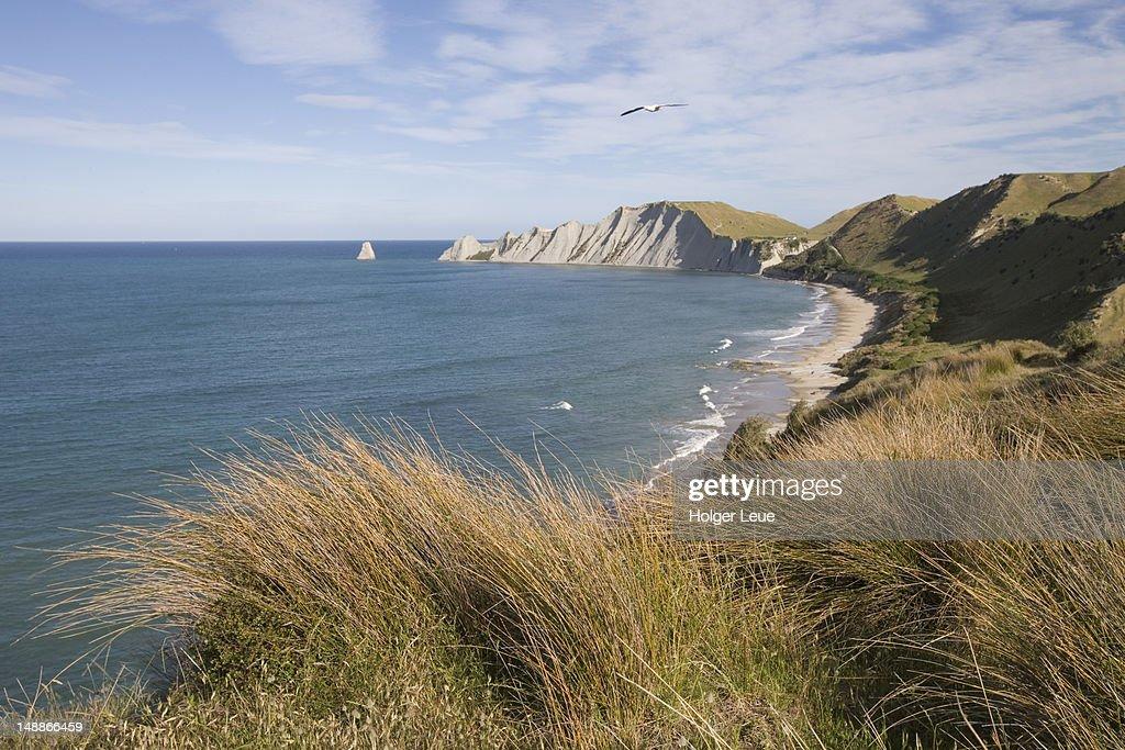 Cape Kidnappers coastline. : Stock Photo