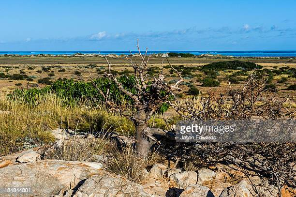 Hardy desert trees grow out of an ancient eroded limestone reef.