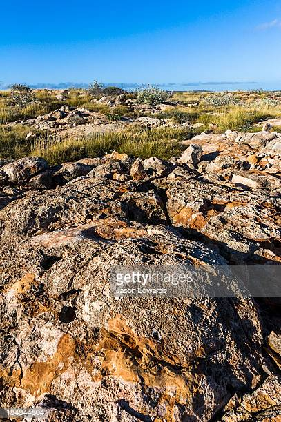 An ancient eroded limestone reef covered in desert Spinifex grass.