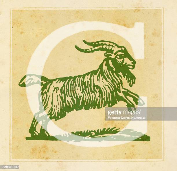 Capital letter C with Capricorn Zodiac sign Digital illustration realized by assembling 19th century printing elements by Elena Piccini Italy Milan...