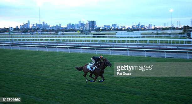 Capitalist during trackwork at Flemington Racecourse on October 25 2016 in Flemington Australia