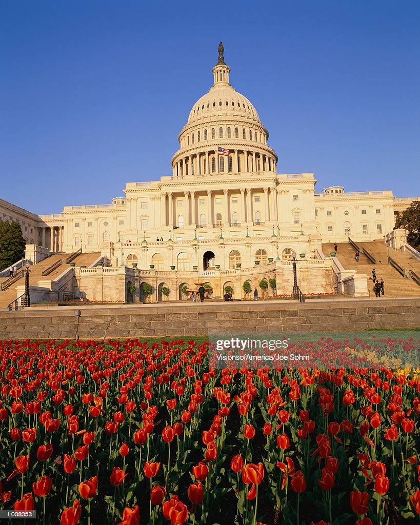 Capitol building with bed of tulips : Stock Photo