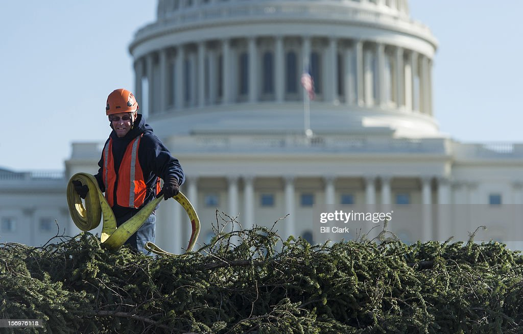 A Capitol grounds workers prepares to hoist the U.S. Capitol Christmas Tree off the truck and into place on the West Front of the Capitol on Monday, Nov. 26, 2012. The tree lighting ceremony will be held the evening of December 4th on the West Front of the Capitol.
