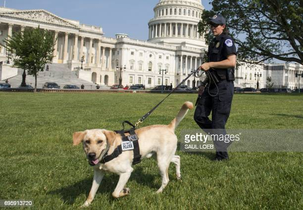 A Capitol Police Officer and police dog patrol around the US Capitol in Washington DC June 14 as security is increased following a shooting incident...