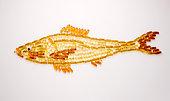 Capsules in shape of fish