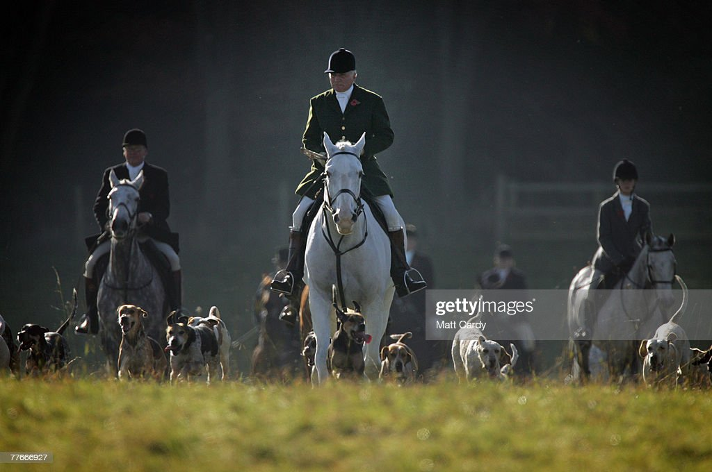Captain Ian Farquhar joint master and huntsman of the Duke of Beaufort's foxhounds leads the hounds on the Badminton Estate on November 3 2007 in...