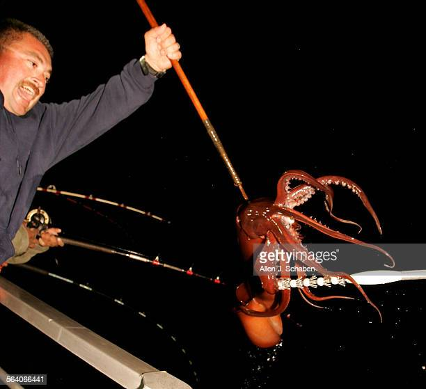 Captain Rick Carbajal cheers as he brings up a Humboldt Squid with a gaff after it was caught in deep water by an angler aboard the New Del Mar with...