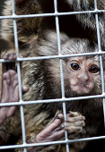 Captive marmoset in cramped cage, shallow depth of field.