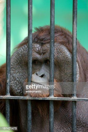 Captivity.
