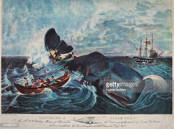 The capture of a sperm whale in the Pacific Ocean 1835 Engraved printed and coloured by J Hill from a sketch by Cornelius B Hulsart